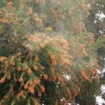花粉症の対策「舌下免疫療法」